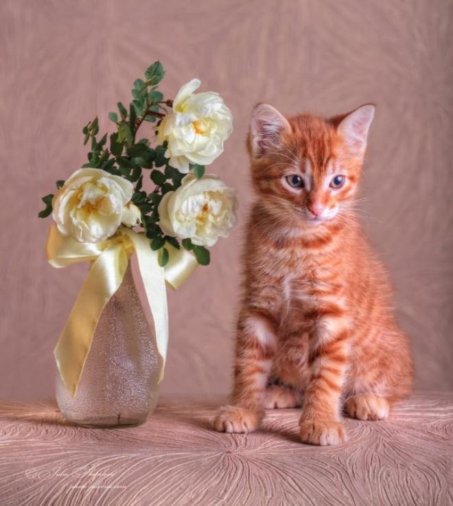 Рыжик и букет дикой розы