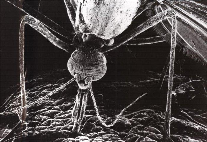 Объекты под микроскопом