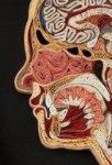 Анатомические картины из бумаги. Квиллинг
