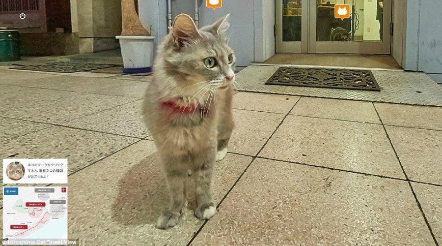 В Японии создали Cat Street View — уличные панорамы для котов