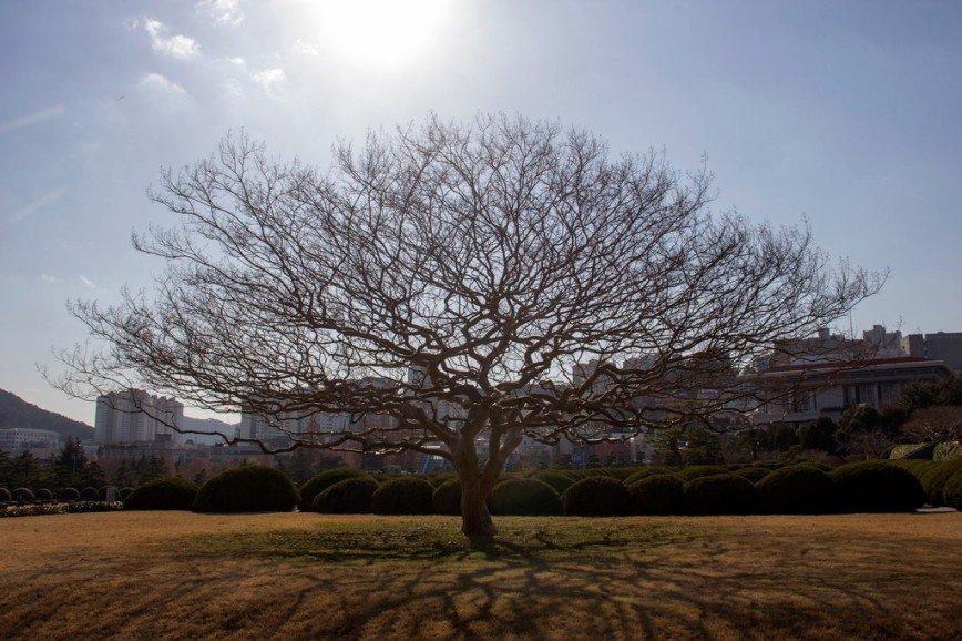 Автор: Розабельверде, Фотозал: Туристические зарисовки, Одинокое дерево.
