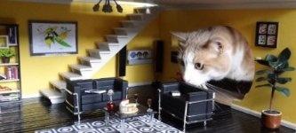 Кукольный дом. Популярное хобби для кошек?