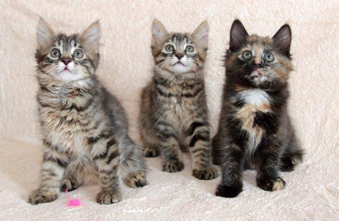 Три сестрички