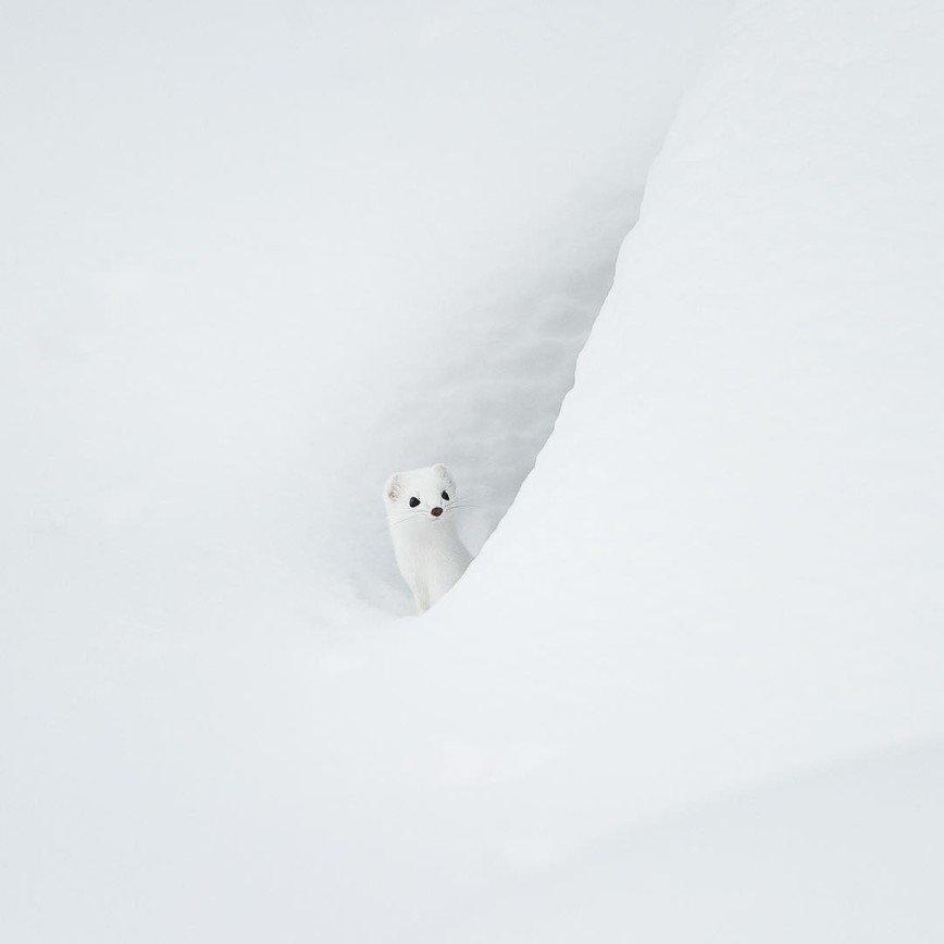 Невероятная красота животных через объектив Стефано Антертинера