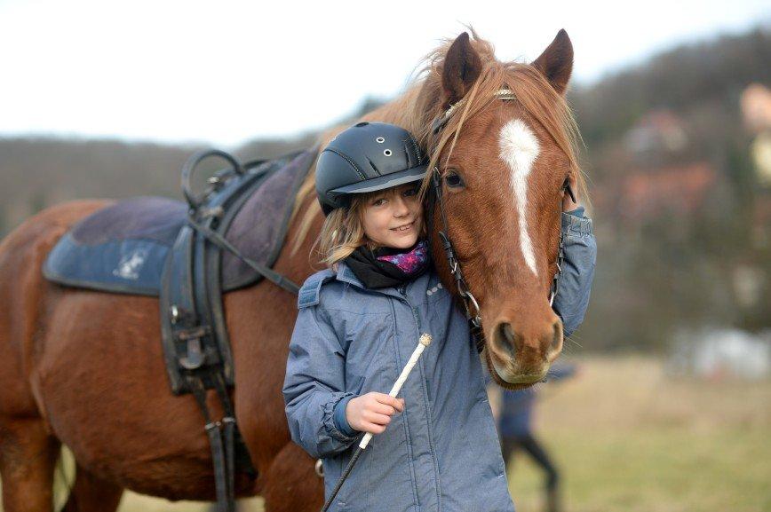 Лошади помогут повысить успеваемость детей в школе