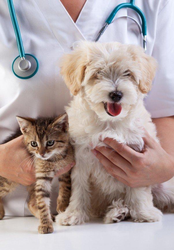 """""""Праздник паразитов"""": новый образовательный проект о здоровье домашних животных"""