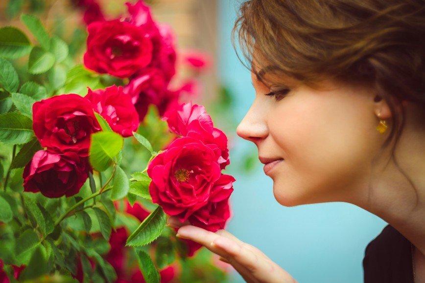 В Крыму появится сад ароматов