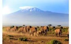 В Кении можно будет наблюдать миграцию слонов
