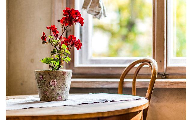 Какие комнатные цветы негативно влияют на человека?