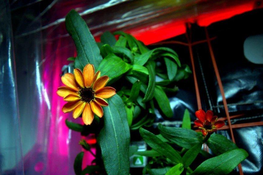 Первый цветок распустился в космосе