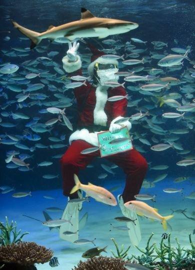 В Японии появился рождественский аквариум