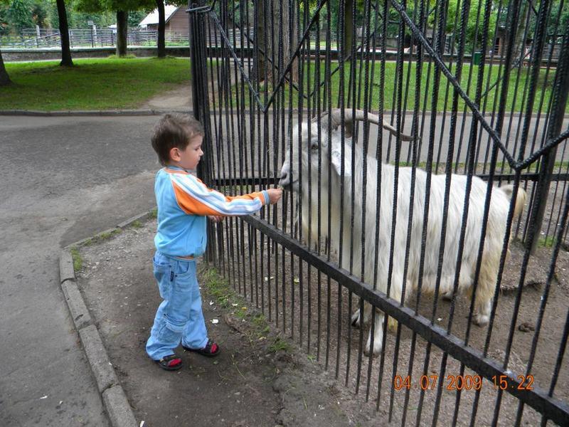 В зоопарке - козлы.....