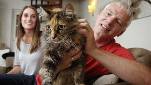 Кошка Хлу уехала в караване во Францию, где сбежала