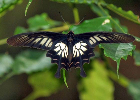 Секс с красивой бабочки