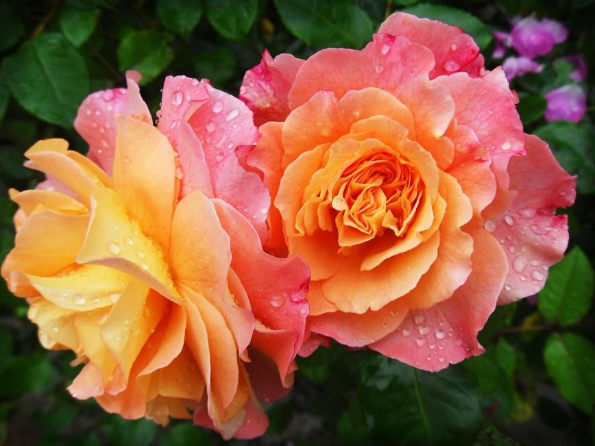 Майская посадка цветов: полезная видеоподборка