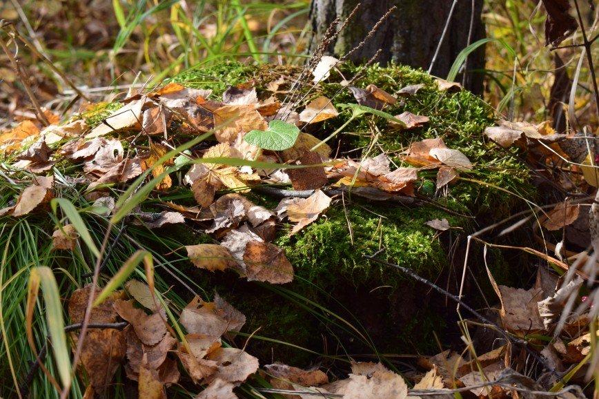 Автор: Багуля, Фотозал: Родные просторы, Осенний листопад