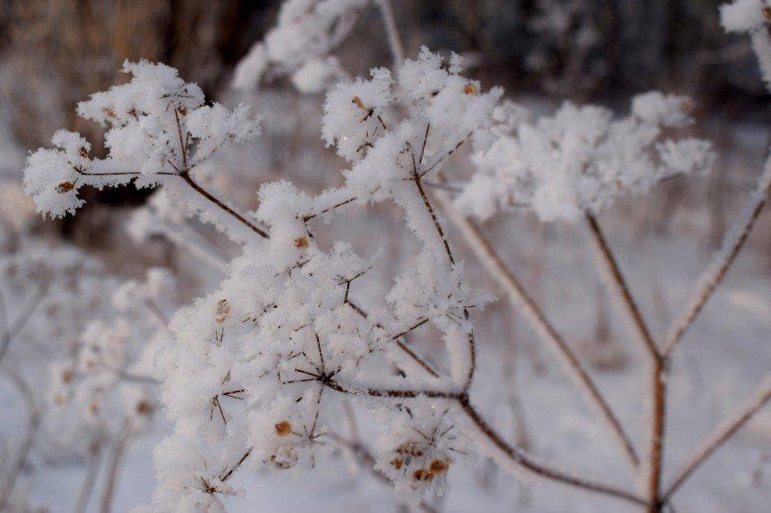 Автор: Багуля, Фотозал: Макро, Первый снег