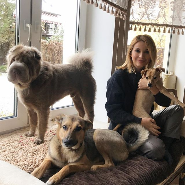 """""""На таких мир держится!"""": Ольга Орлова помогла потерявшейся собаке вернуться домой"""