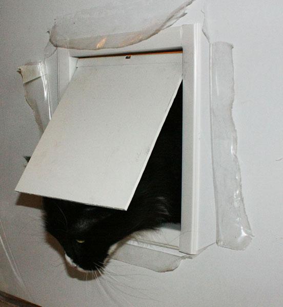 Дверцы для кошек сделать своими руками