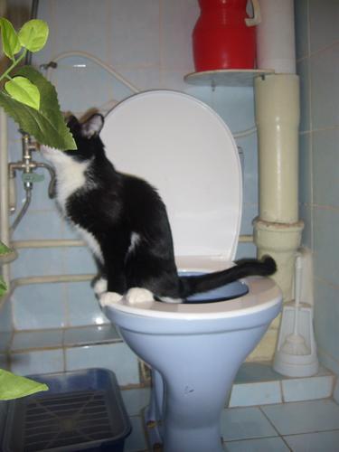 мгновенно возглавивший часто и понемногу хожу в туалет по большому какие-то проблемы