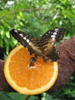 Мое фото Пчелка -Ма