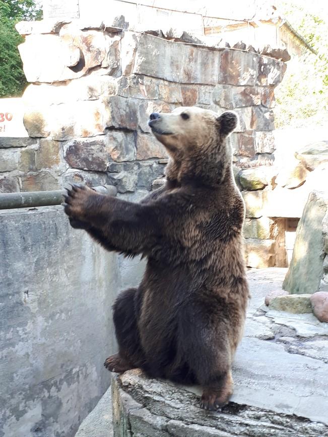 Автор: Lilija, Фотозал: Туристические зарисовки, Вот такой цирковой медведь в зоопарке в Калининграде.