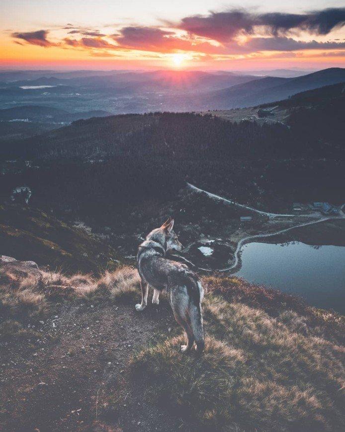 Следуй за Ситкой: чешский фотограф путешествует по миру со своей собакой