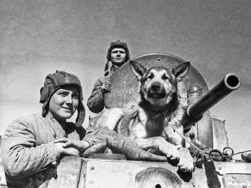 Санитар Мухтар, диверсант Дина, миноискатель Джульбарс: собаки, спасшие миллионы жизней во время войны