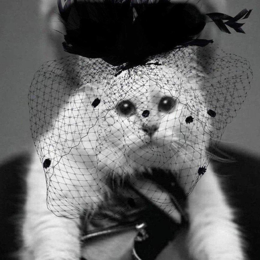 Кошка Шупетт выпустила капсульную коллекцию в память о Карле Лагерфельде