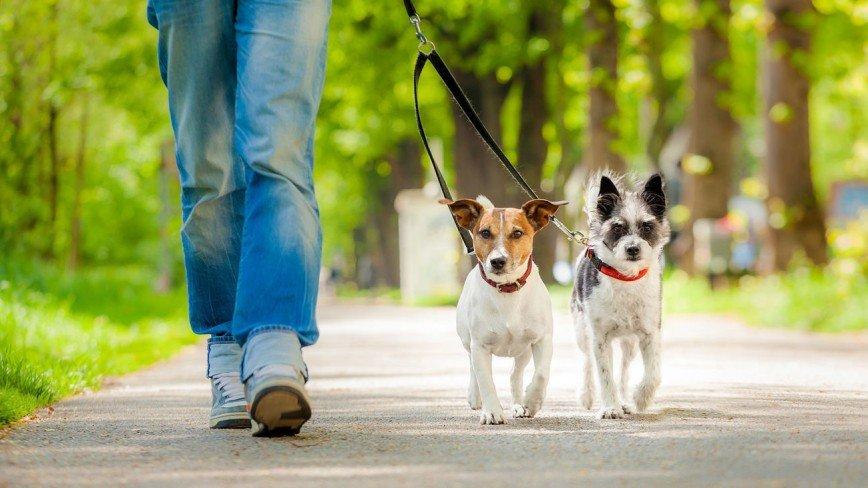 Сделай то, не знаю что: почему уборка за собаками становится настоящей проблемой
