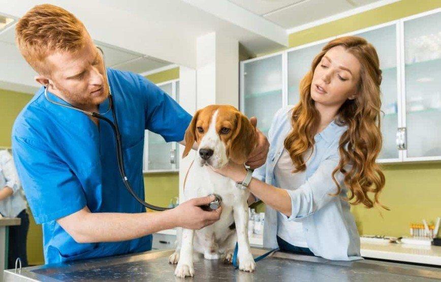 Бесплатная диспансеризация для собак и кошек пройдет в городах России