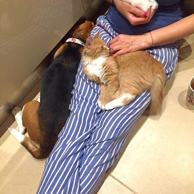 «Корейский шашлык»: поклонников Алферовой повеселило фото кота в мангале