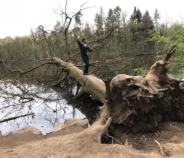 «Пирожки на ветках!»: Александр Ревва взобрался на дерево