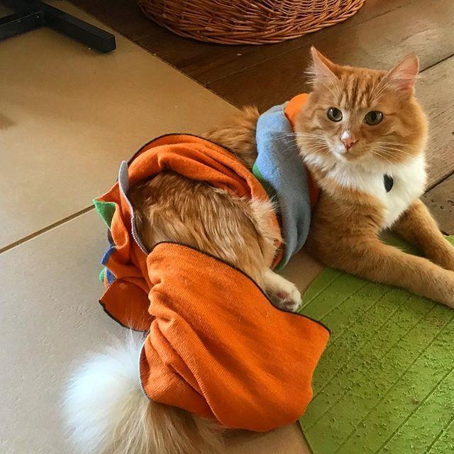 Кот-модник Алферовой поразил сердца пользователей Сети