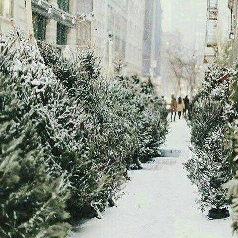 Как продлить жизнь новогоднему дереву