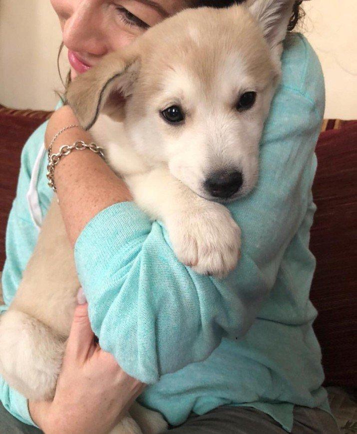«Наша принцесса»: Алена Хмельницкая взяла щенка из приюта