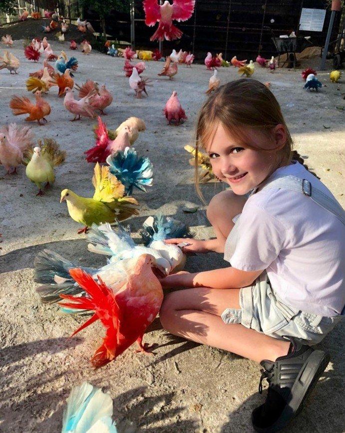 Глюкоза посетила парк с разноцветными голубями в Таиланде