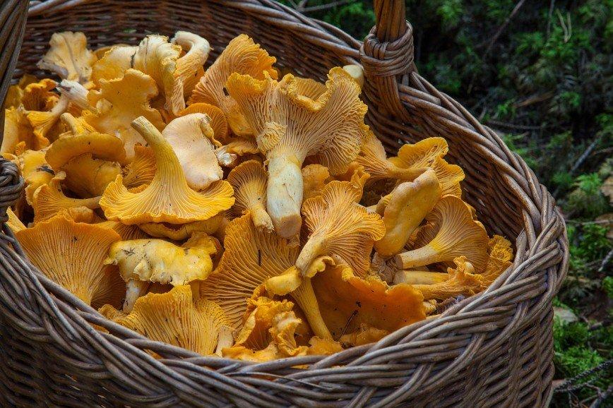 """""""Не покупайте продукты с рук!"""": в Москве обнаружили около тонны радиоактивных ягод и грибов"""