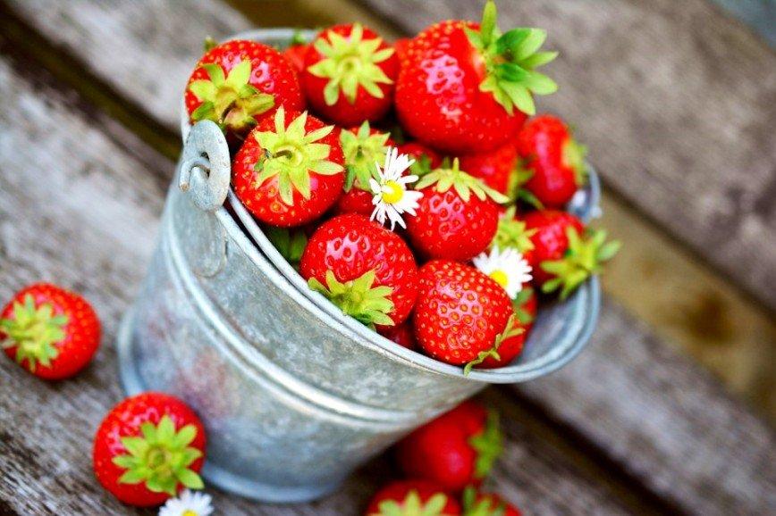 Клубничка для взрослых: как своими руками вырастить ароматные ягоды и собирать урожай вплоть до осени