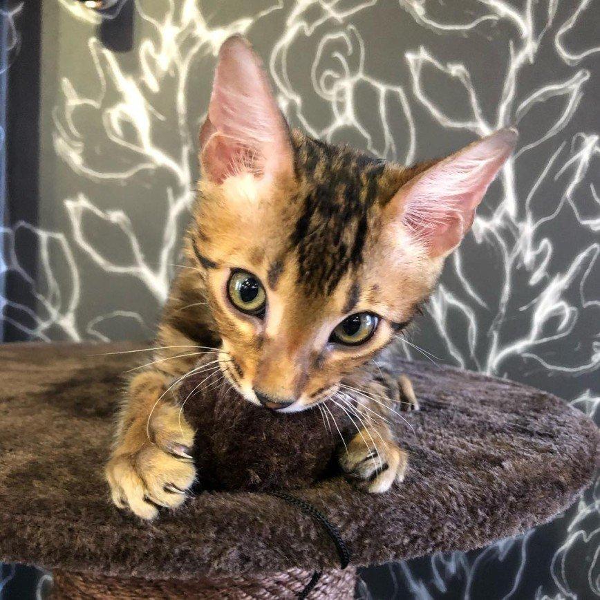 Все любят котиков: у Сергея Лазарева появился домашний питомец