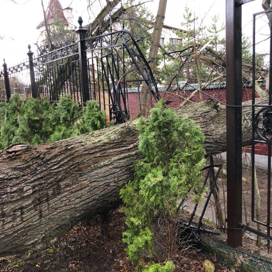 «Стихия — это страшная сила»: во дворе замка Галкина и Пугачевой из-за урагана рухнуло дерево