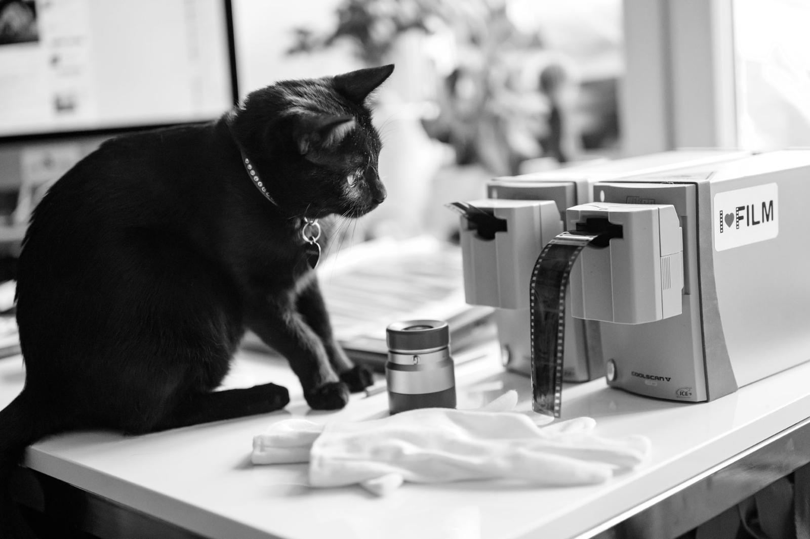 Котики поработят мир: как сфотографировать любимца, чтобы получить максимум лайков