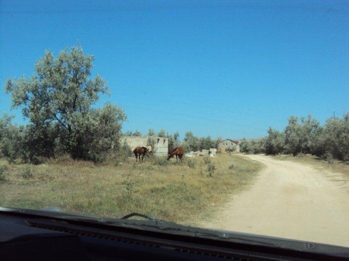 дорога до Щелкино