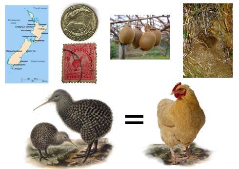 Наш доклад по Окружающему миру о нелетающих птицах, выбрали птицу киви. Еще в помощь рассказчику составили с ним план рассказа о том,  в какой стране живет птица, почему ее изображают на монетах и марках, какого она размера и т.п.