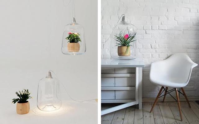 Гениальные лампы для комнатных растений