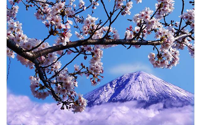 Гора Фудзи станет платной