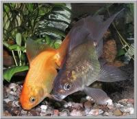 Мое фото рыбка2
