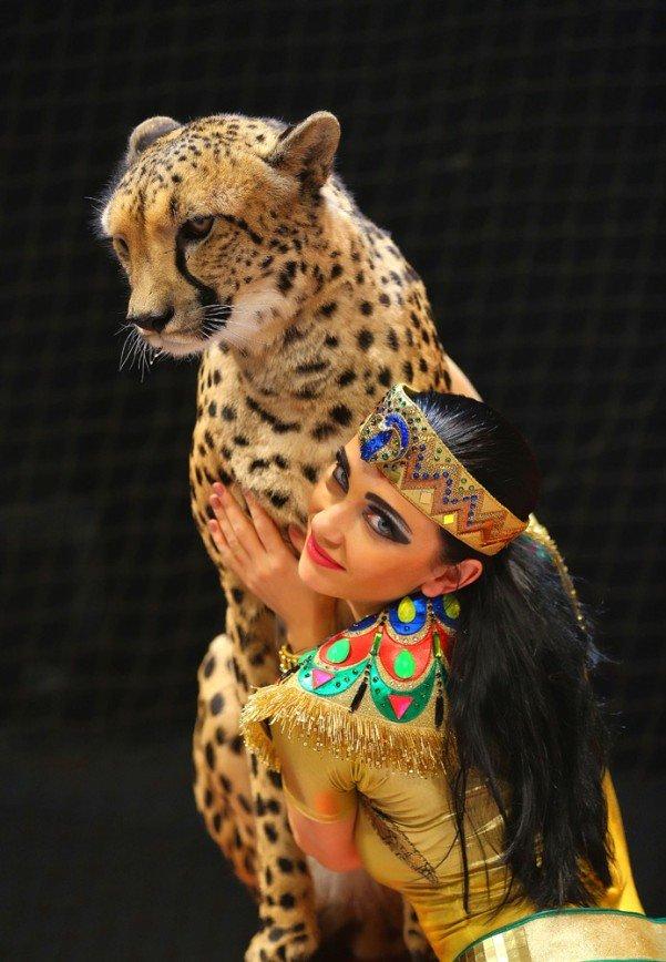 Дрессировщица гепардов Дарья Костюк: «Там, где появляется Дю Солей, цирки с животными закрываются»