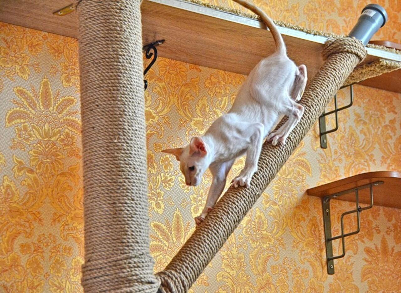 Сделали ветку, чтобы кошкам было интереснее лазить. Котенок(ориентал) очень цепкий и легкий, ему интересно, хоть и сложновато. Взрослая кошка(британка) пока просто когти точет. В общем-то, ветку можно было и не делать, с ней хлопот только больше, и она больше носит эстетический характер.