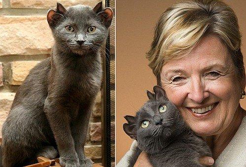 История котика с четырьмя ушами